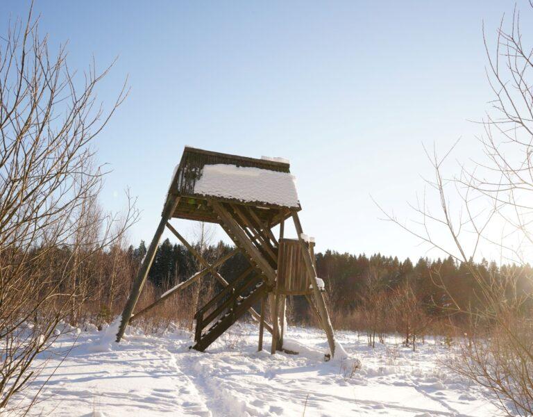 ett högt ton i trä som står i snön