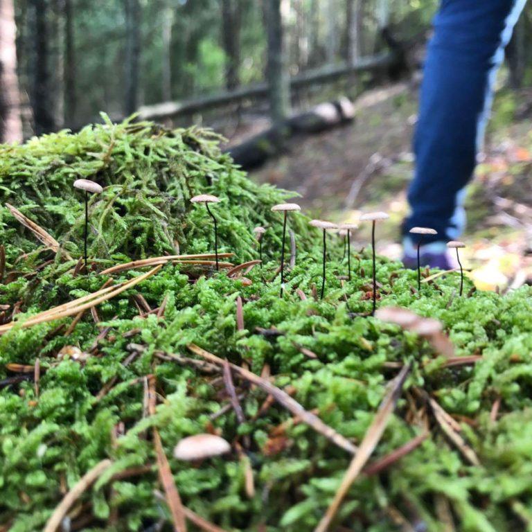 mossa med små svampar och en persons ben i bakgrunden