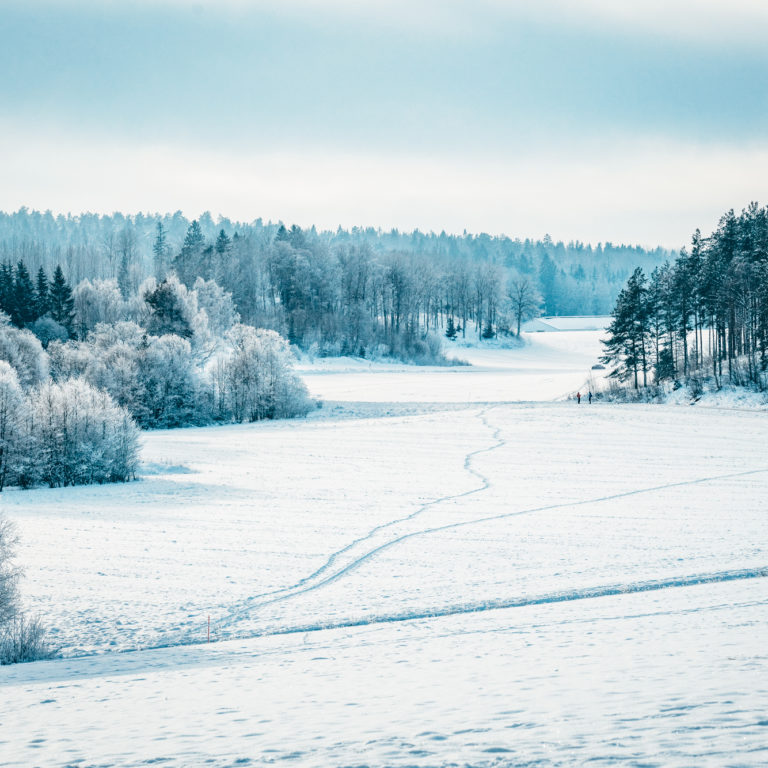 ett snötäckt fält med skog runt omkring