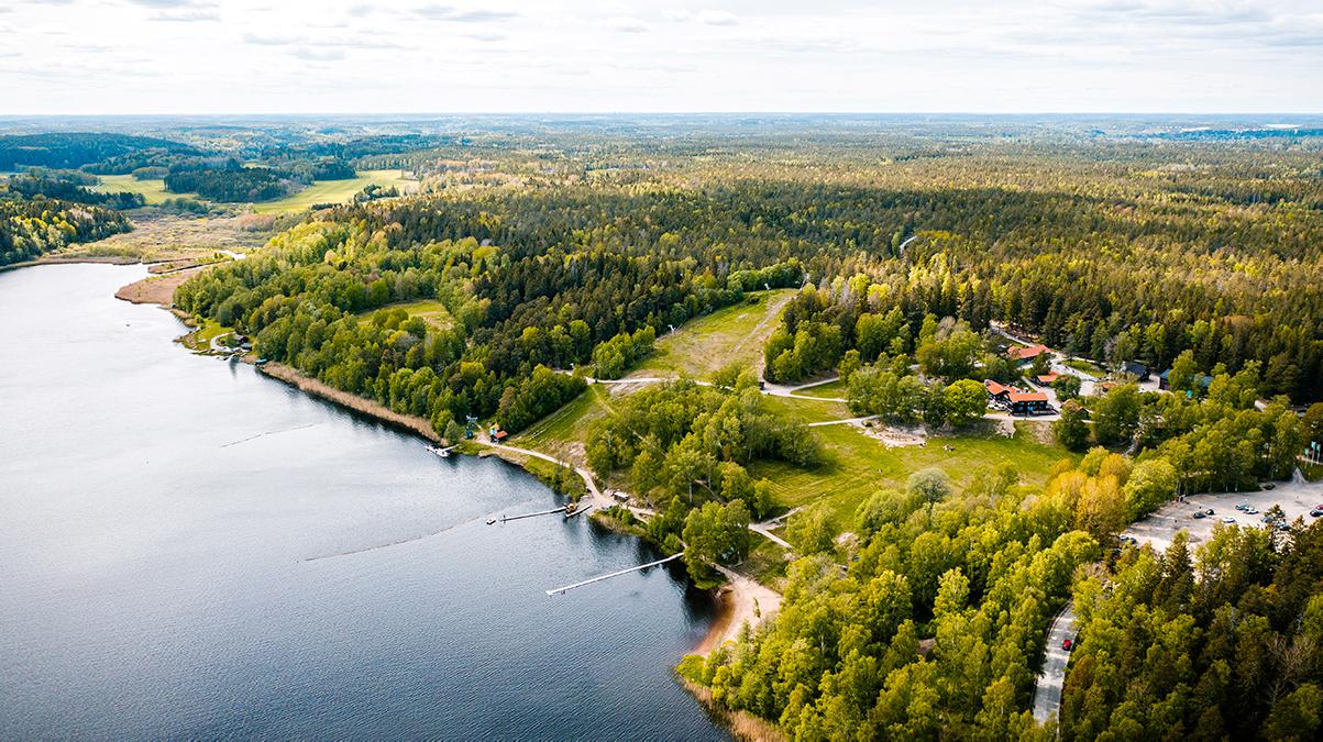 Skog med gröna träd och en sjö med blått vatten