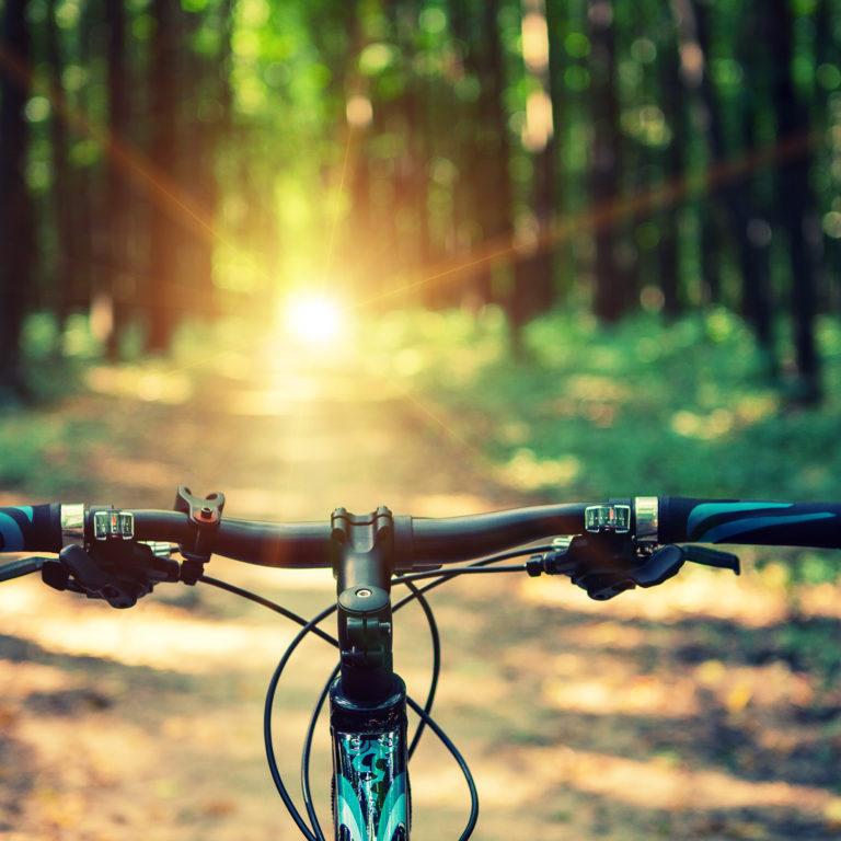 cykelstyre på en skogsstig med solljus