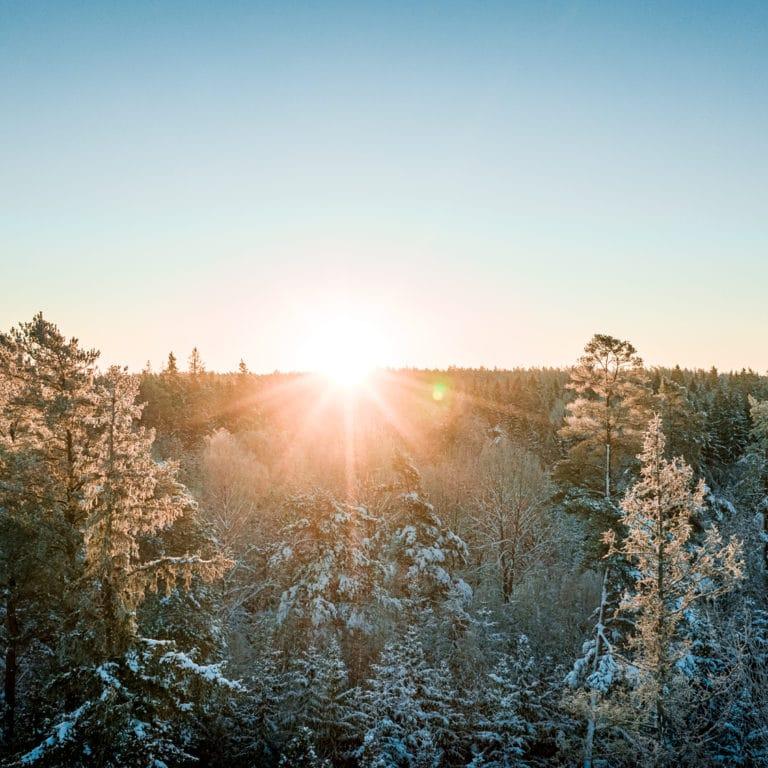 soluppgång över skog i vinterskrud